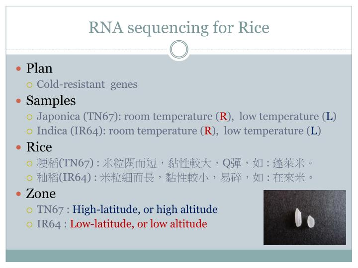 RNA sequencing for Rice