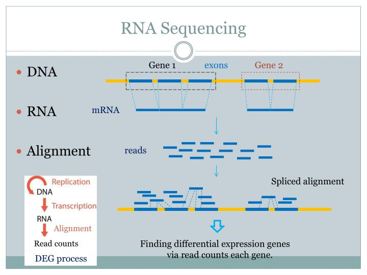 RNA Sequencing