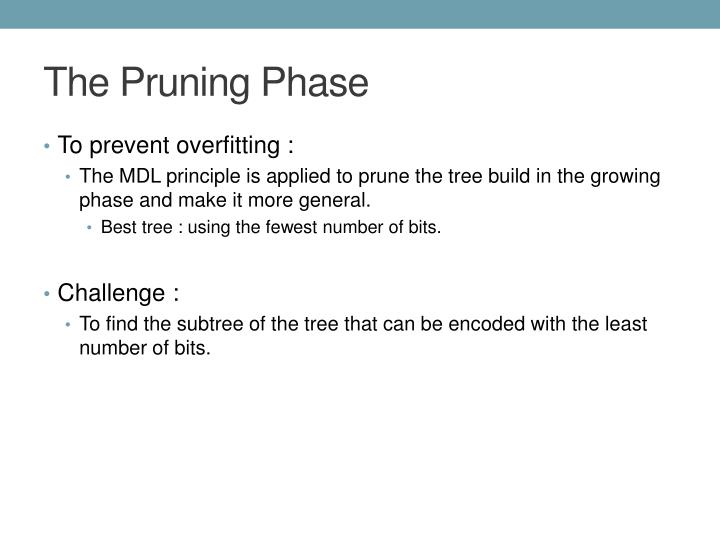 The Pruning Phase