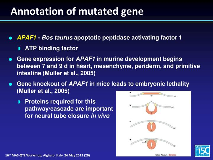 Annotation of mutated gene