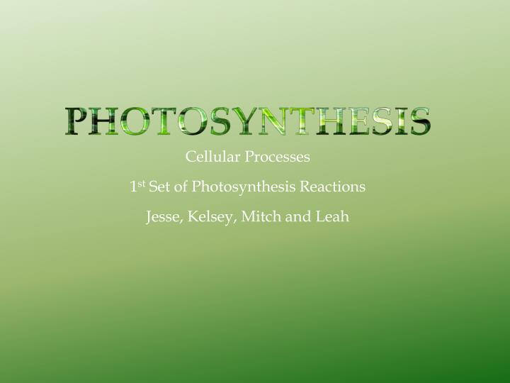 Cellular processes 1 st set of photosynthesis reactions jesse kelsey mitch and leah