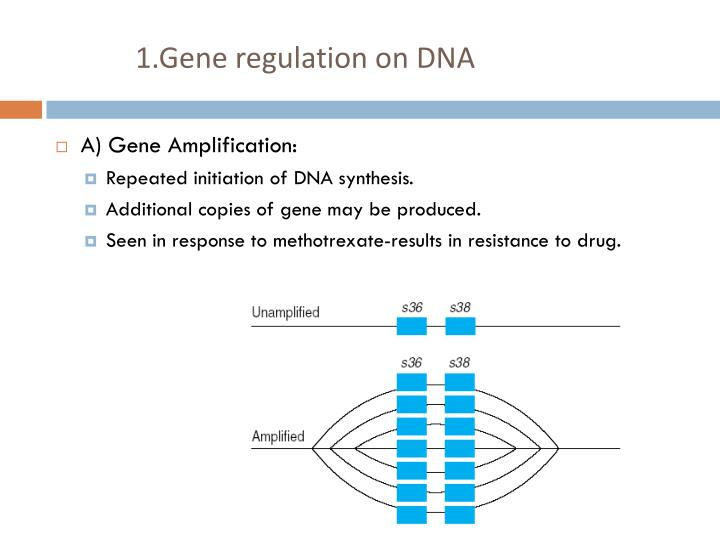 1.Gene regulation on DNA