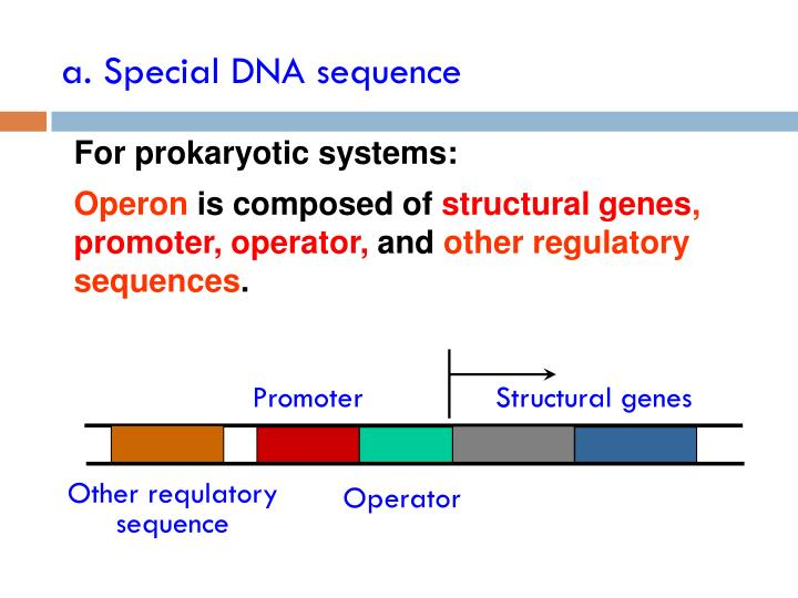a. Special DNA sequence