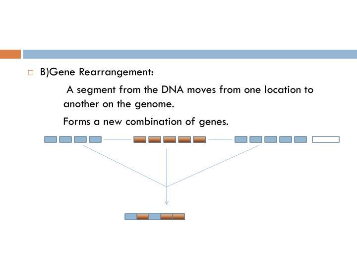 B)Gene Rearrangement: