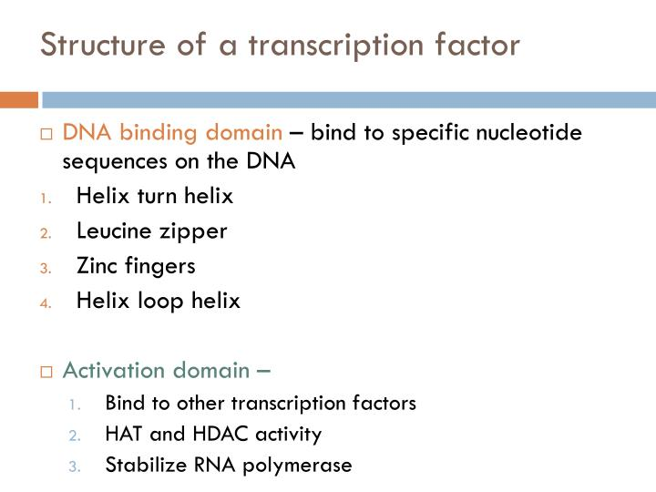 Structure of a transcription factor
