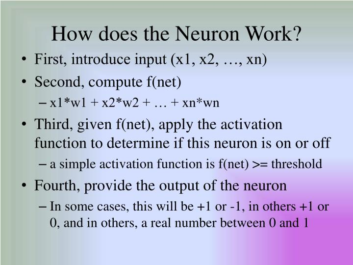 How does the Neuron Work?