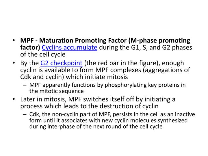 MPF - Maturation Promoting Factor (M-phase promoting factor)