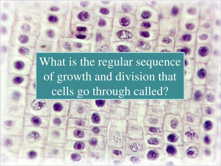 What is the regular sequence of growth and division that cells go through called?