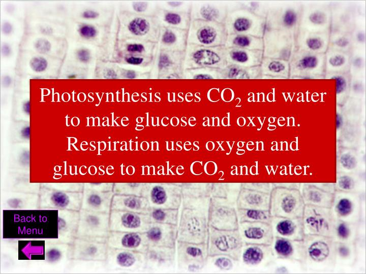Photosynthesis uses CO