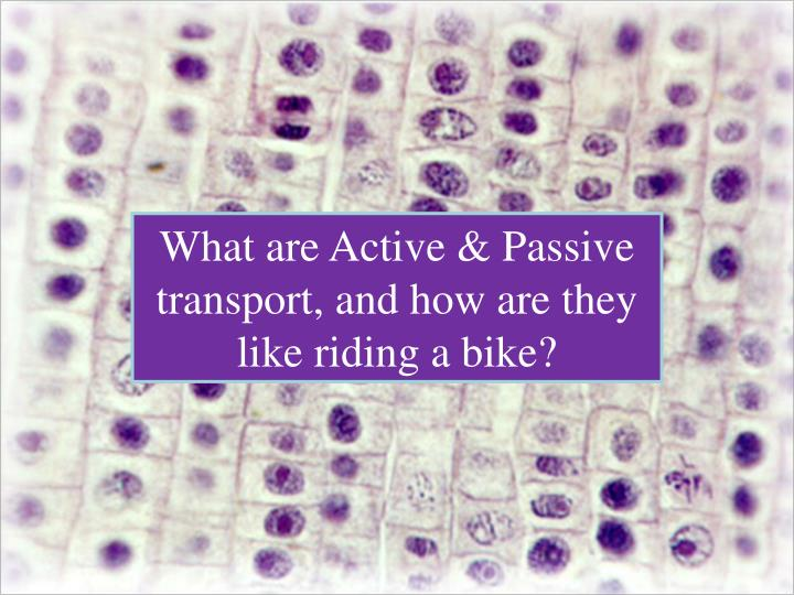 What are Active & Passive transport, and how are they like riding a bike?