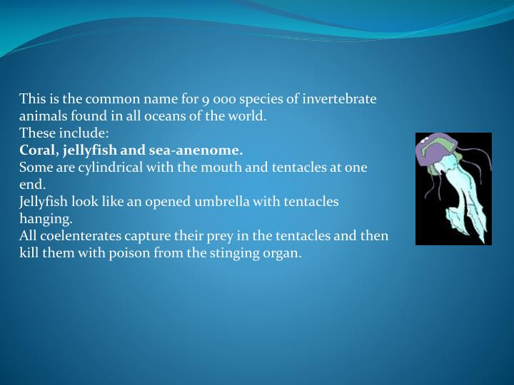 This is the common name for 9 000 species of invertebrate animals found in all oceans of the world.