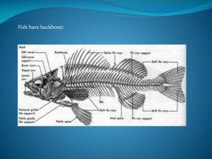 Fish have backbone: