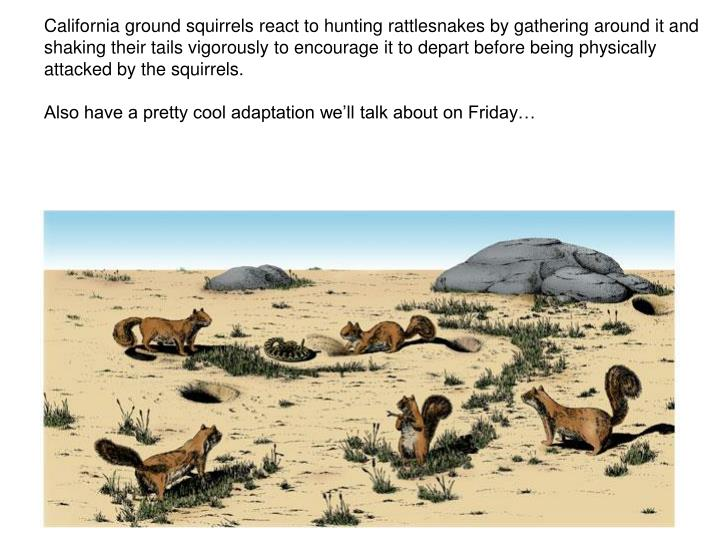 California ground squirrels react to hunting rattlesnakes by gathering around it and shaking their tails vigorously to encourage it to depart before being physically attacked by the squirrels.