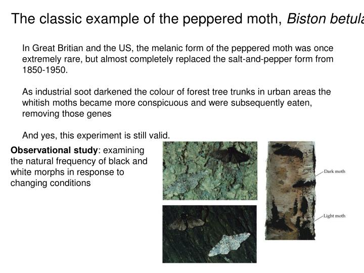 The classic example of the peppered moth,