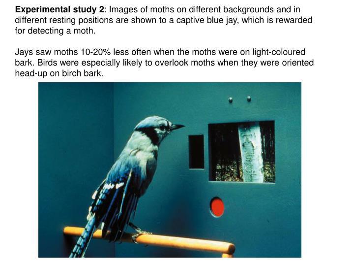 Experimental study 2