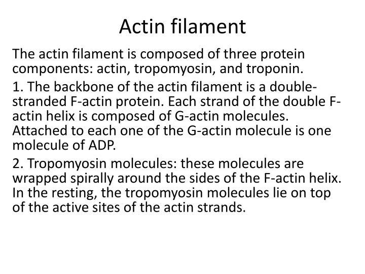 Actin filament