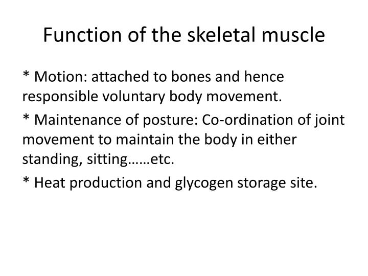 Function of the skeletal muscle