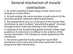 general mechanism of muscle contraction