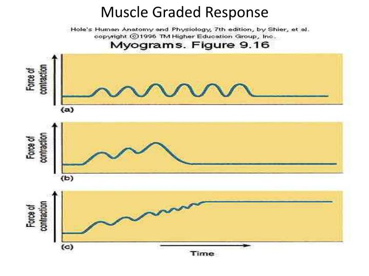 Muscle Graded Response