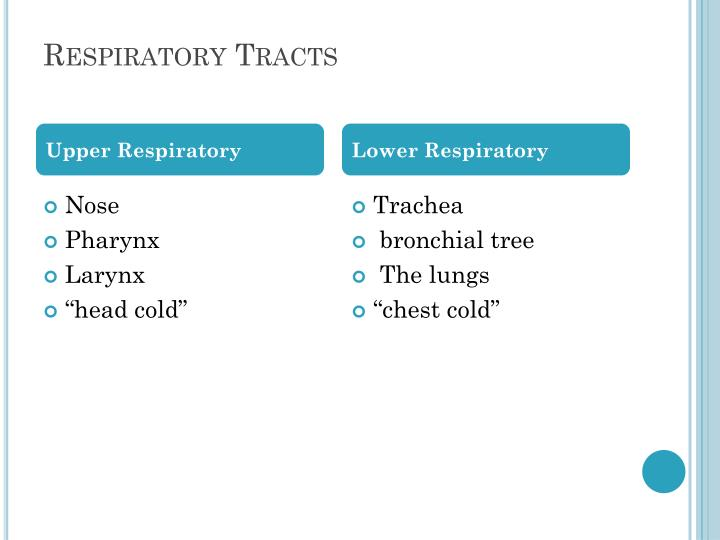 Respiratory Tracts