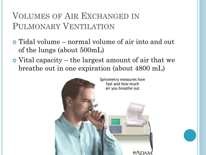 Volumes of Air Exchanged in Pulmonary