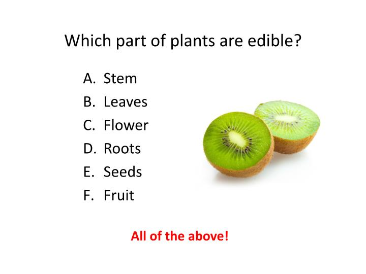 Which part of plants are edible?