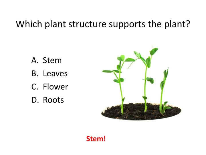 Which plant structure supports the plant?