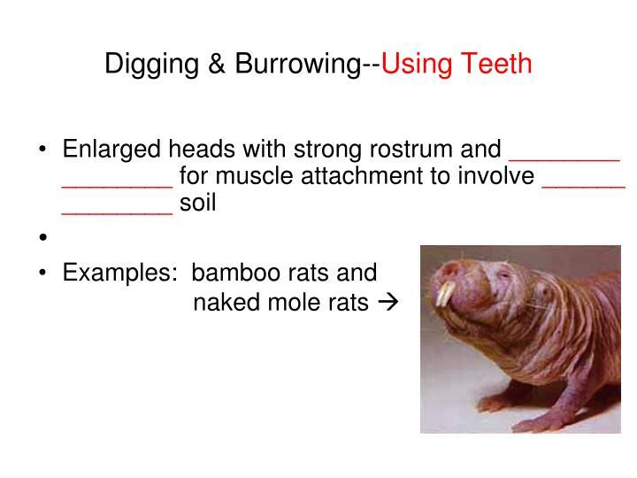 Digging & Burrowing--