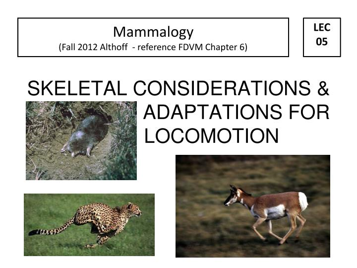 Skeletal considerations adaptations for locomotion