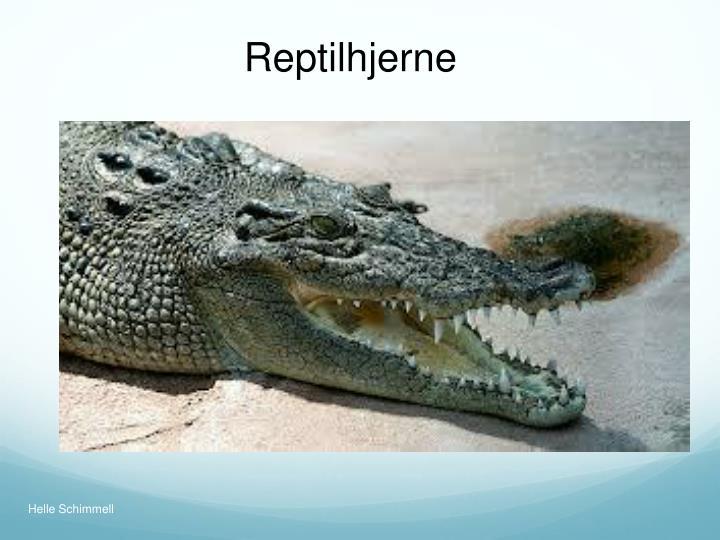 Reptilhjerne