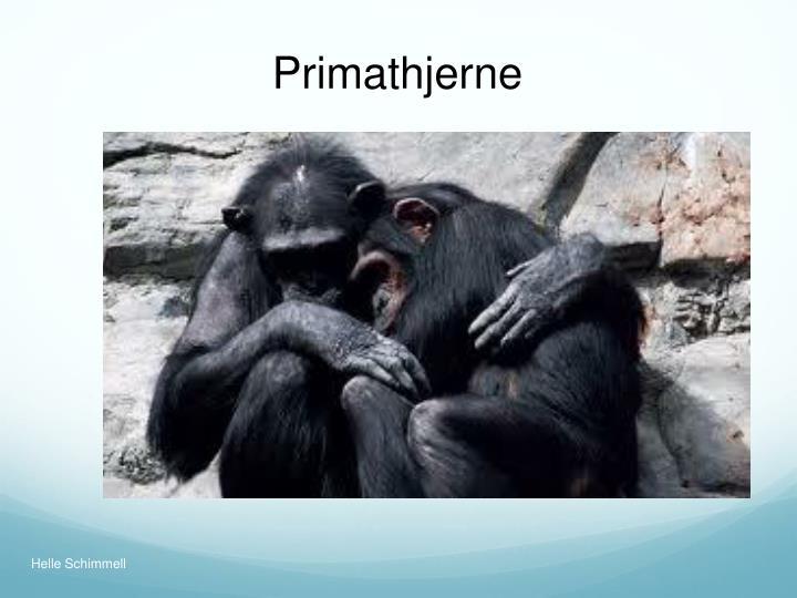 Primathjerne