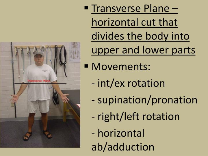 Transverse Plane – horizontal cut that divides the body into upper and lower parts