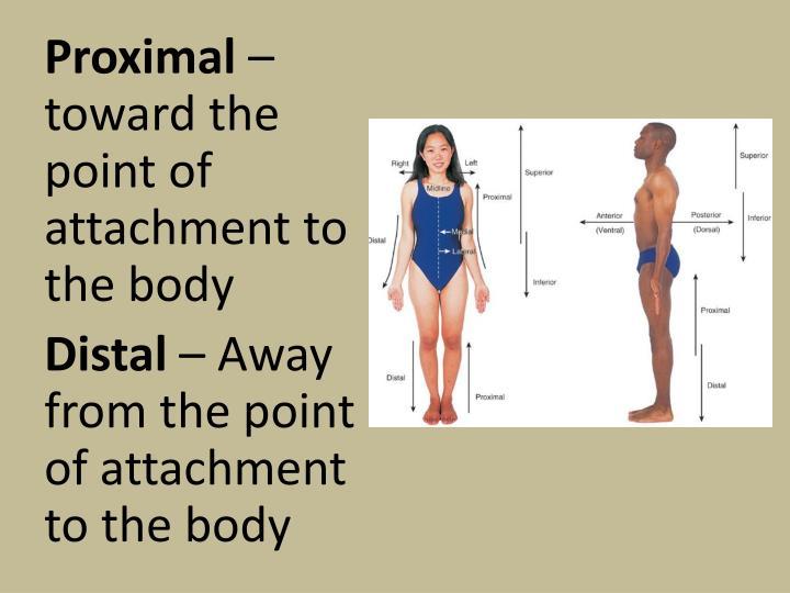 Proximal