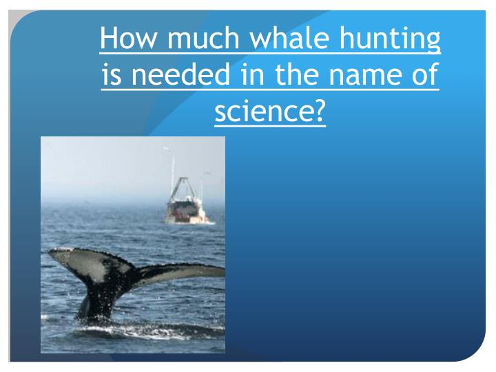 How much whale hunting is needed in the name of science