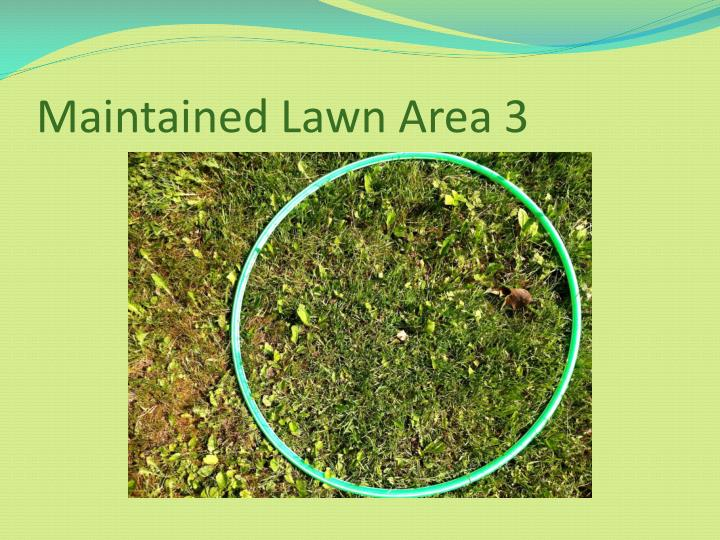 Maintained Lawn Area 3