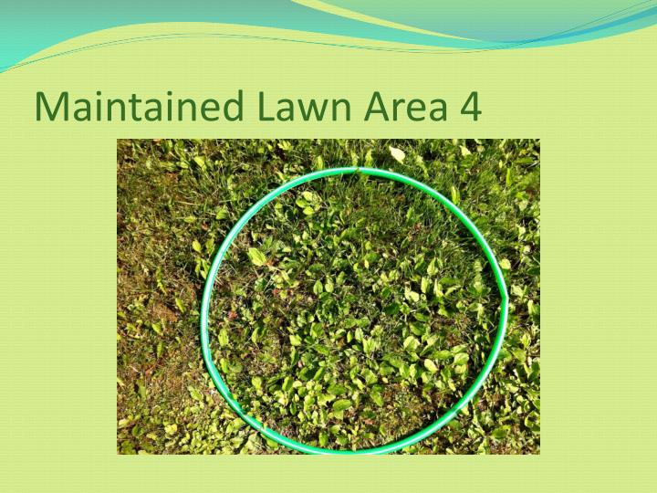 Maintained Lawn Area 4