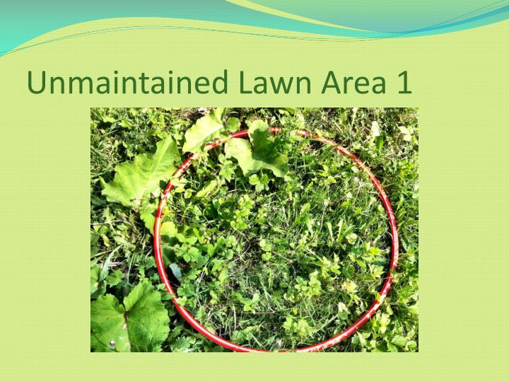 Unmaintained Lawn Area 1