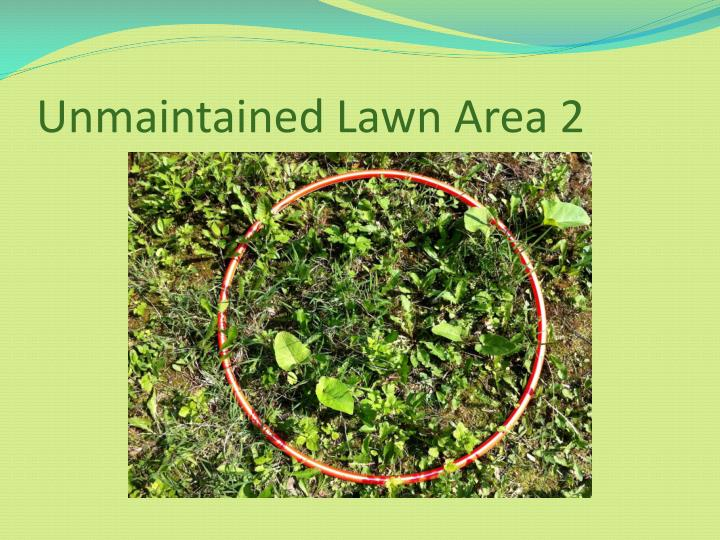 Unmaintained Lawn Area 2