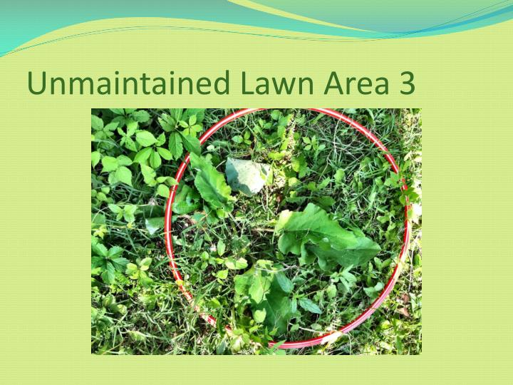 Unmaintained Lawn Area 3