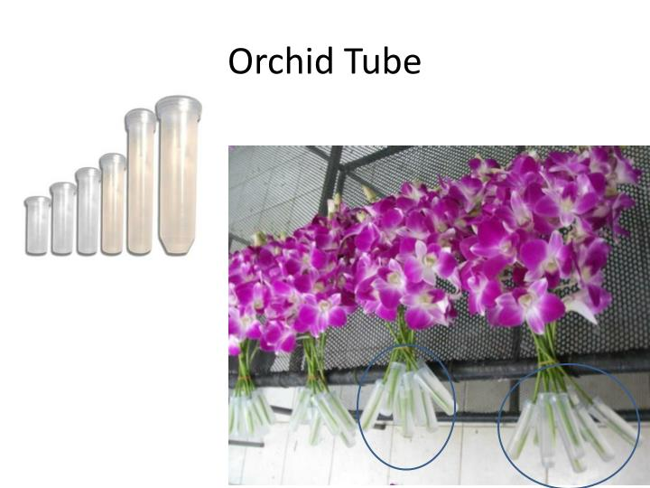 Orchid Tube