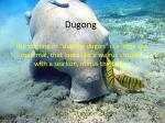 dugong1