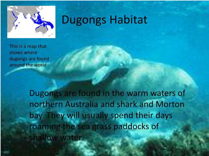 Dugongs Habitat