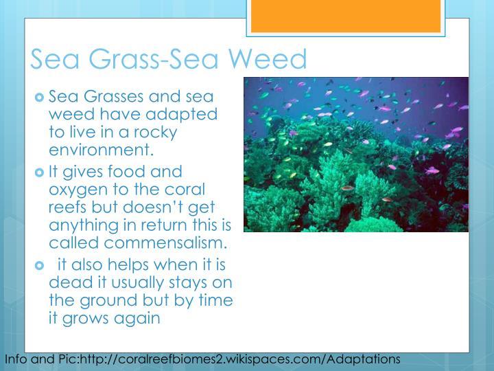 Sea Grass-