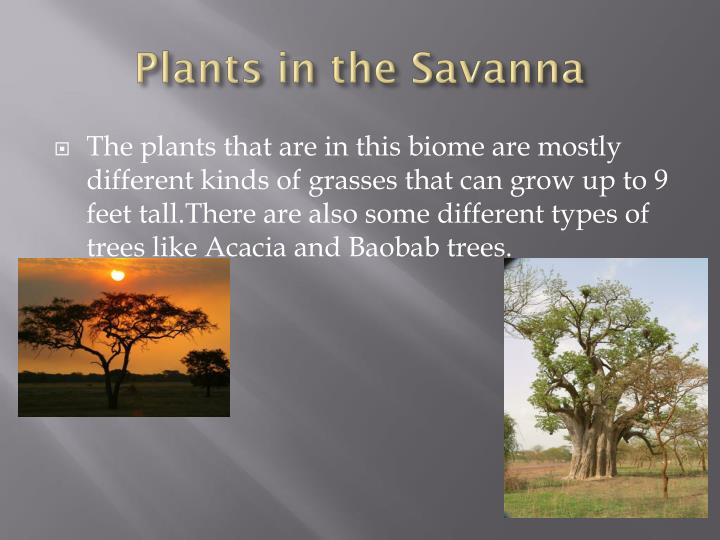 Plants in the Savanna