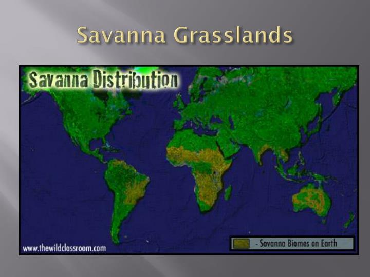 Savanna Grasslands