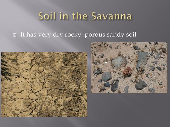 Soil in the Savanna