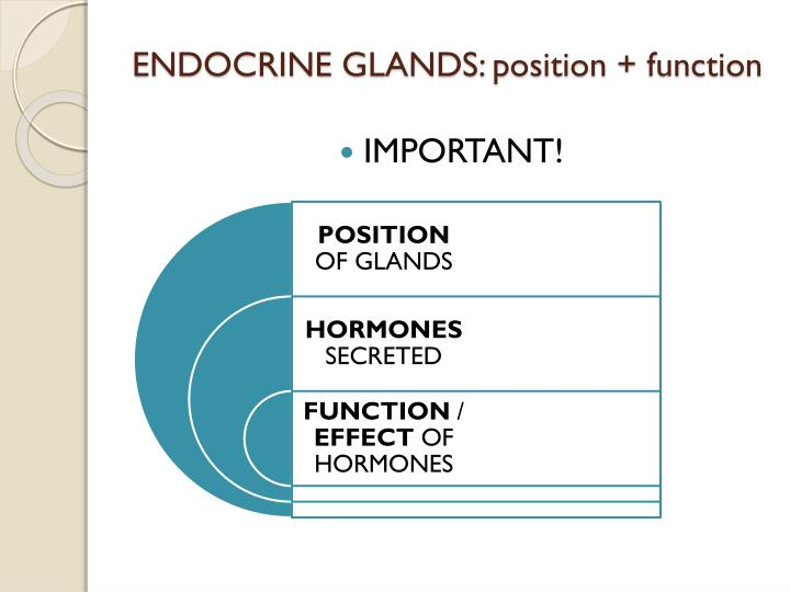 ENDOCRINE GLANDS: position + function