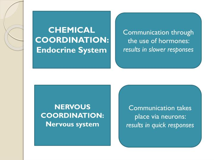 CHEMICAL COORDINATION: Endocrine System
