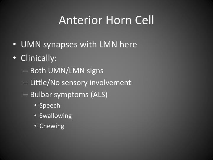 Anterior Horn Cell