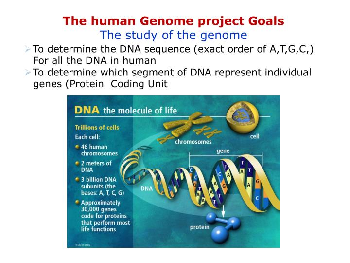 an analysis of the significance of the human genome project About igsr and the 1000 genomes project  pilot analysis a map of human genome variation from population-scale sequencing nature 467, 1061–1073 (28 october 2010.